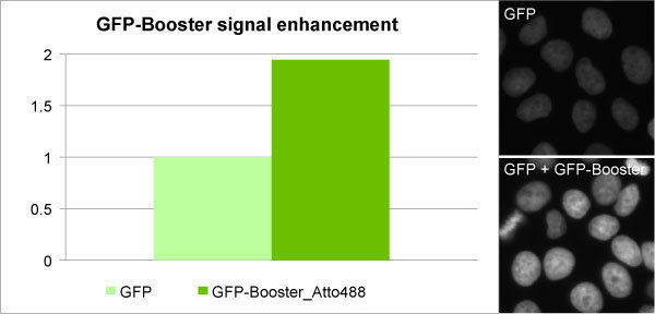 GFP-Booster